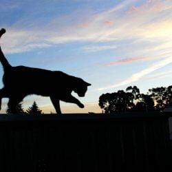 Wandering cat