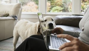 Coronavirus may benefit companion animals and owners by encouraging remote diagnosis