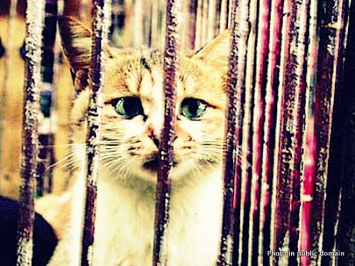Cat in cage in live animal market in China