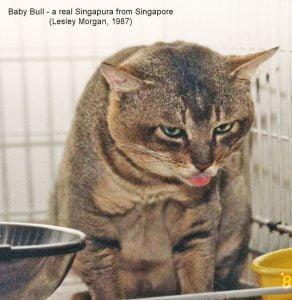 A real Singapura