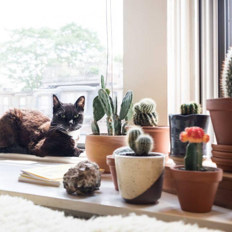 Apartment cat