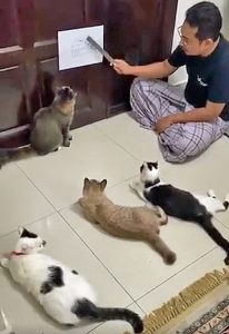 Attentive cats listen to their owner lecture them on Covid-19