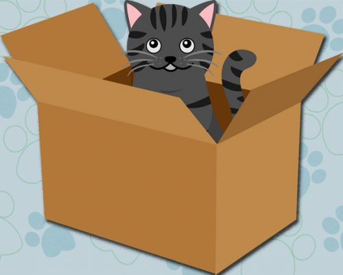 Cat abandonment