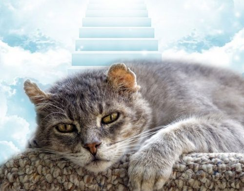 Cats don't think of heaven
