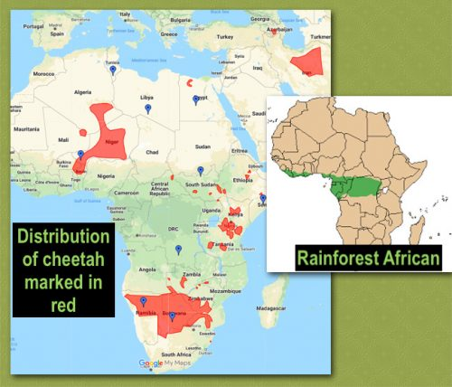Cheetah distribution and rainforest in Africa