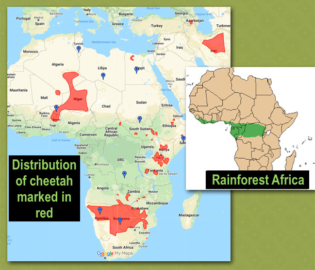 ribution and rainforest in Africa