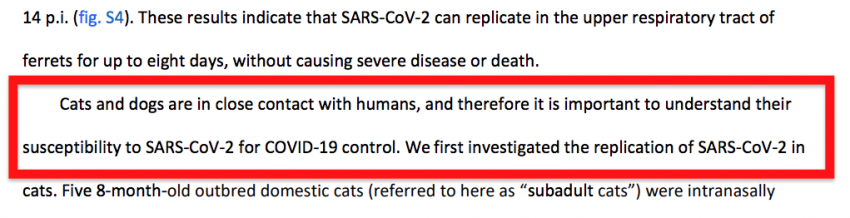 Covid-19 and cats study