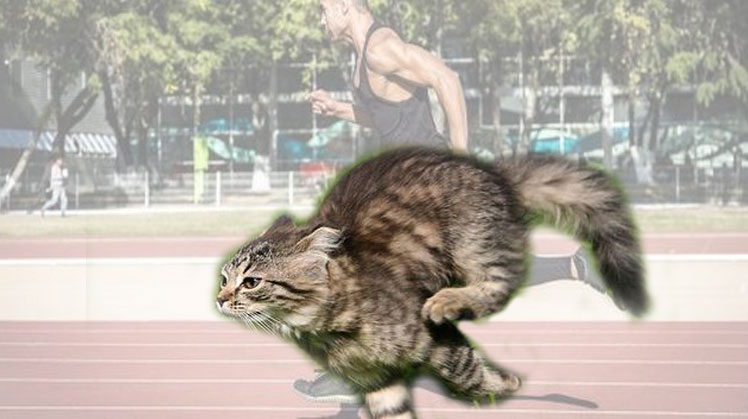 Domestic cats are faster than humans