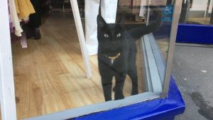 Frankie a cat lost and trapped in a locked shop