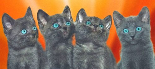 Four kittens - the average litter size