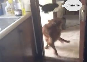 High excitement when cat meets dog buddy