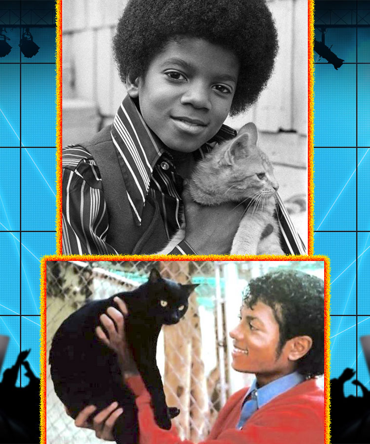 Pictures of Michael Jackson and cats