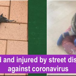 Poisoned by disinfectant against coronavirus in Spain