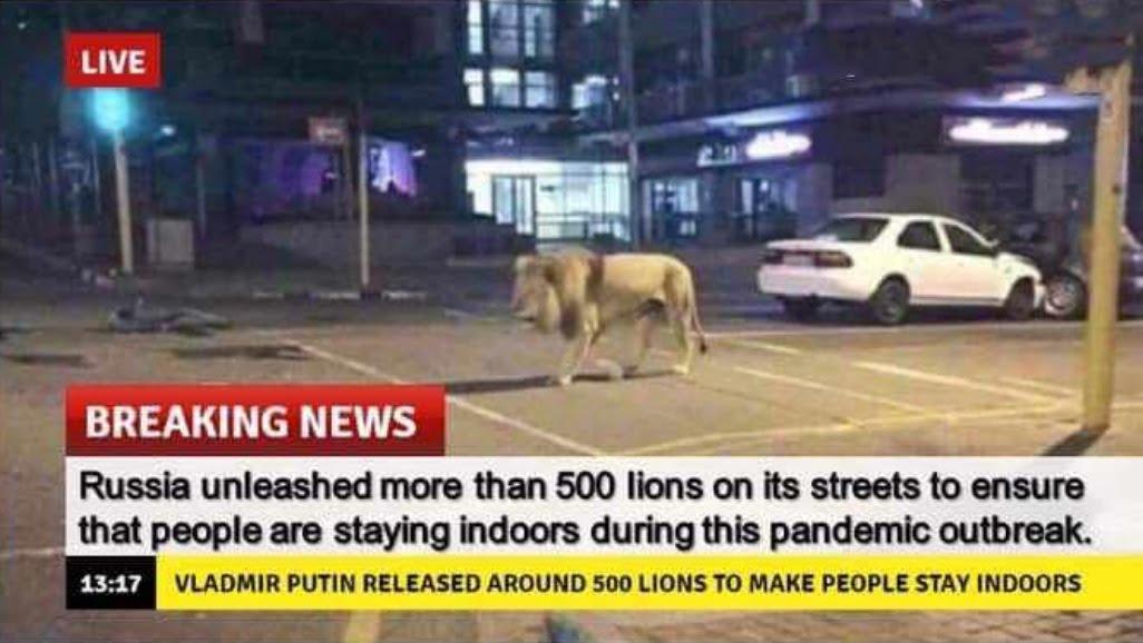 Putin uses lions to enforce lockdown