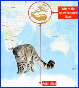 Does the snow leopard live in Antarctica?