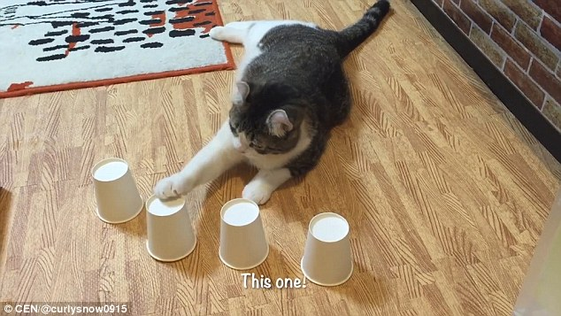 Snow figures out the correct cup