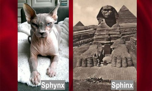 Sphynx and Sphinx