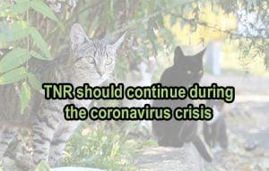 TNR should continue during the coronavirus crisis