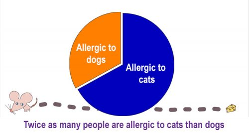 Twice as many people are allergic to cats than to dogs