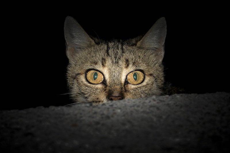 Cat active at night