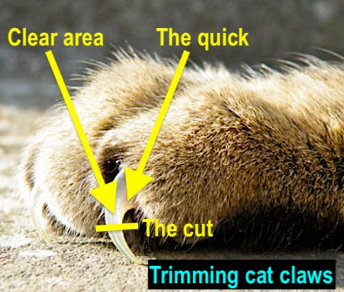 Trimming a cat's claws diagram
