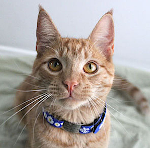 Looking nice in a cat collar