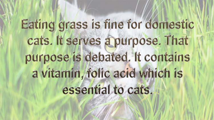 Cat eats grass for a reason and it is good for cats