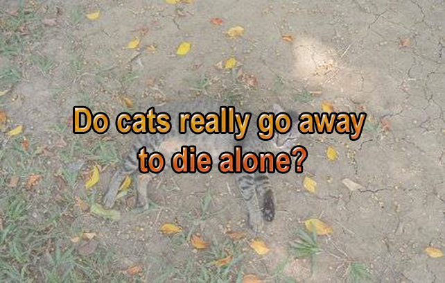 Do cats really go away to die alone?