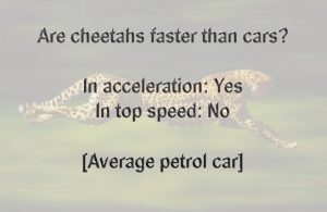 Are cheetahs faster than cars?