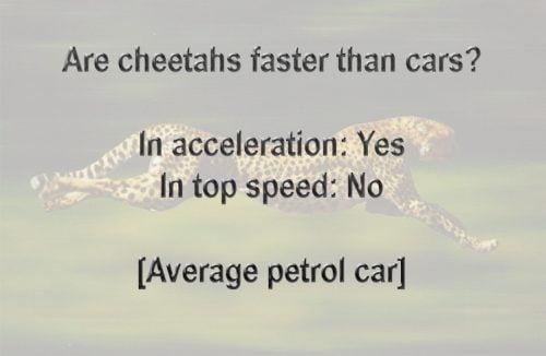 Are cheetahs faster than cars?