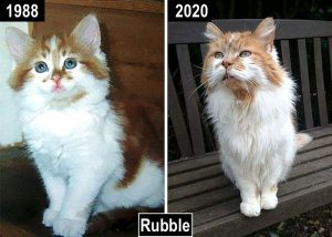 Rubble - how a cat aged to 32