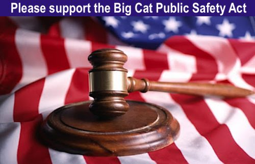 Please support the Big Cat Public Safety Act
