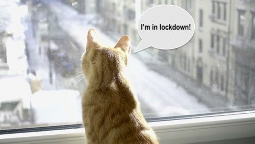 Lockdown for cats
