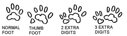 Cat Poly feet