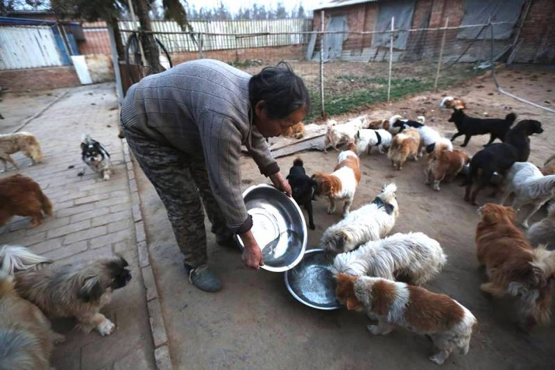 Study suggests that China's stray dogs have passed on the Covid-19 virus to people after eating infected bats.