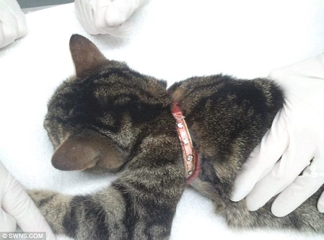 This cat happen with a cat collar
