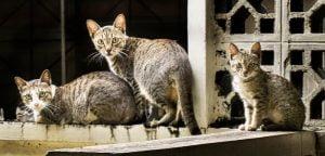 3 domestic cats
