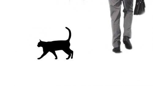 Black cat crossing person's path