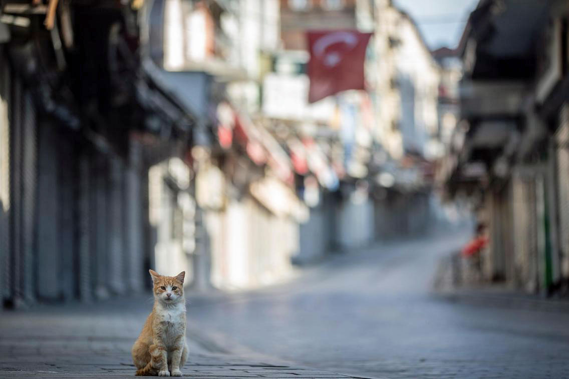 Cat all alone on Istanbul's deserted streets