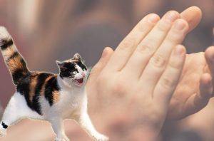 Cat frightened of mass clapping for the NHS every Thursday