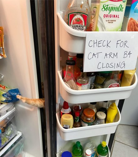 Carrot the cat loves his food