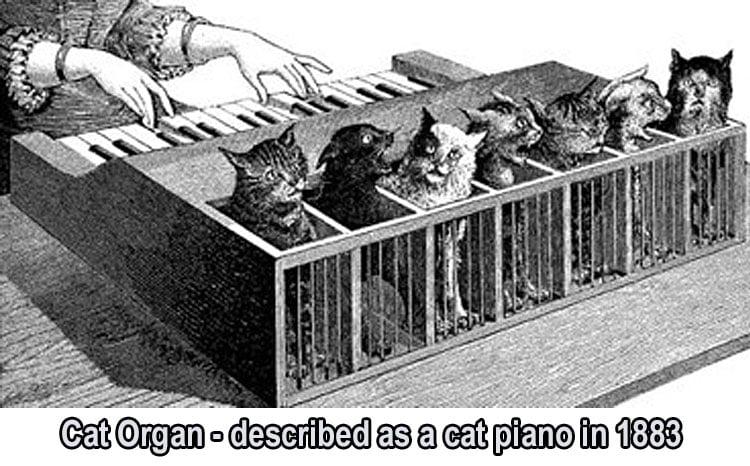 Cat organ