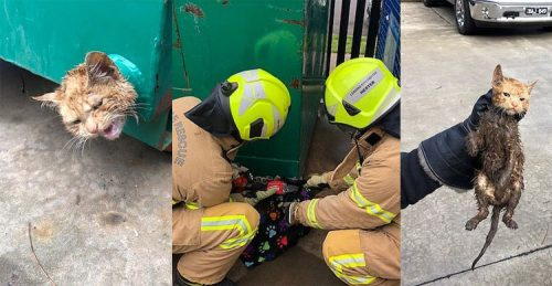 Aussie firefighters rescue trapped cat