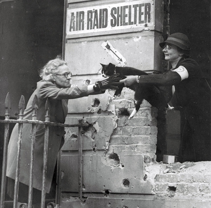 Cat rescued during the blitz