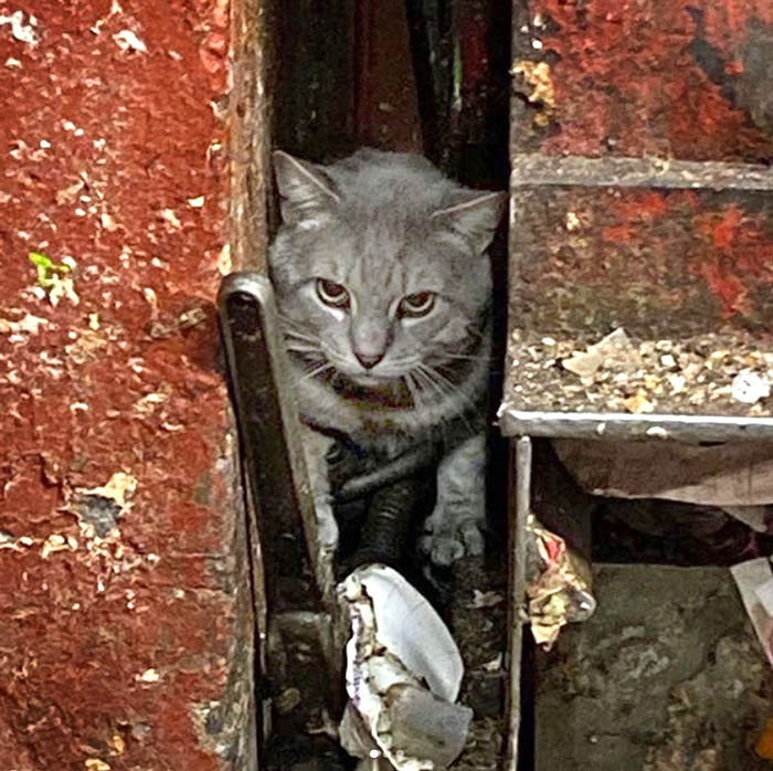 Believed that cat thrown down garbage chute, now rescued