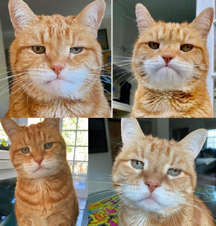 Cat with disappointed face