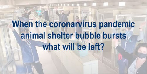 Coronavrius animal shelter bubble
