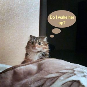 How do I stop my cat waking me at 4 am?