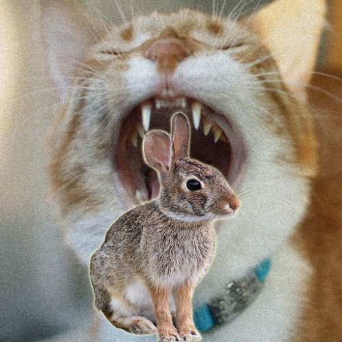 Domestic cats do kill rabbits