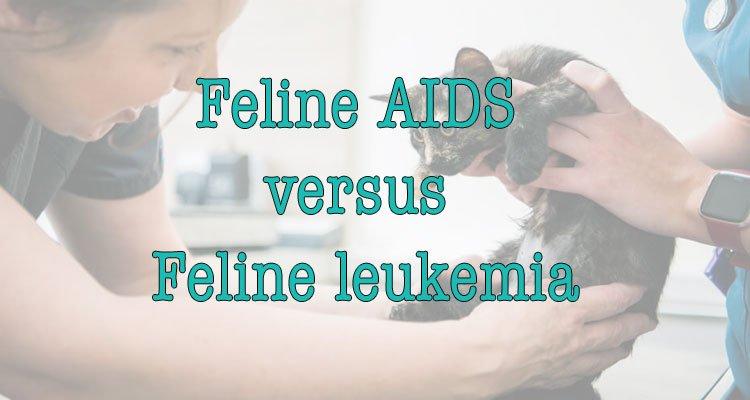 Feline AIDS  versus feline leukemia